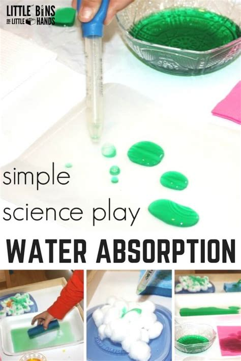 water science experiment for on learning play 876 | Water Science Activity Exploring Water Absorption for Kids STEM 680x1020
