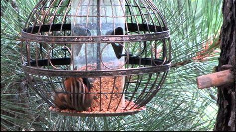 chipmunk meets squirrel proof bird feeder youtube