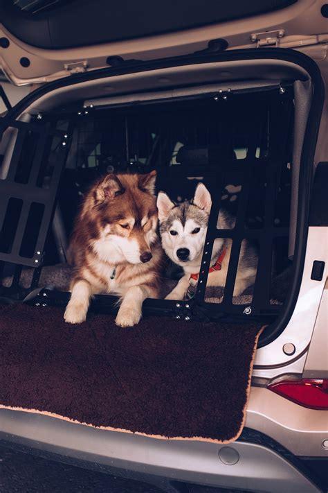 hund im auto transportieren hundegitter oder hundebox so transportieren wir unsere