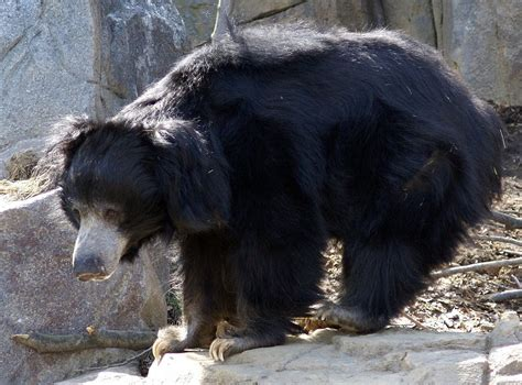 Images Of Different Bear