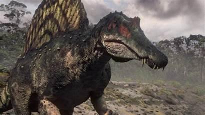 Spinosaurus Wallpapers Carcharodontosaurus Dinosaur Rex Cave Fight