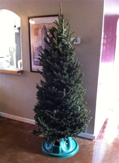 taking care of christmas trees how to get a 5 tree and how to take care of it 171 ideas wonderhowto