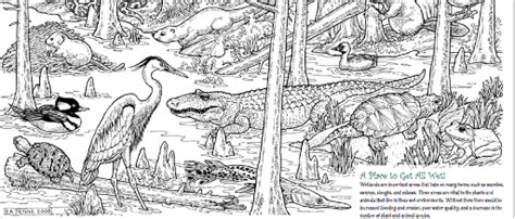Coloring Pages Of Wetland Animals Marsh And Swamp