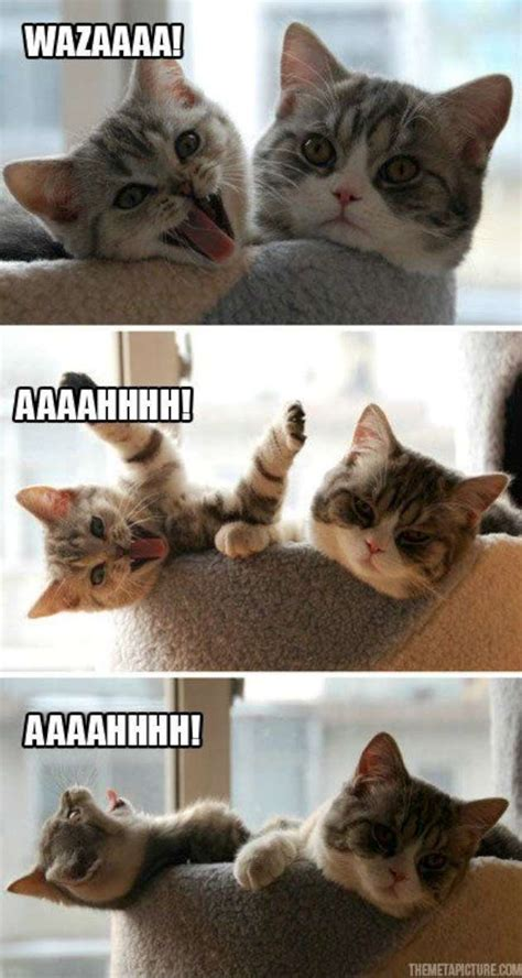 Annoying Cat Meme - funny cat is annoying his friend w630