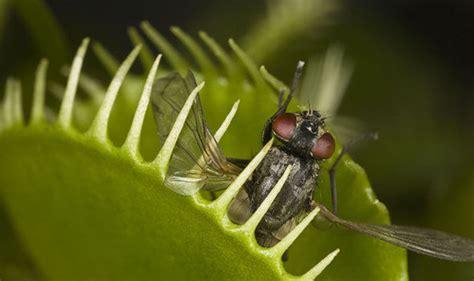 carnivorous plants turned  tables  developed