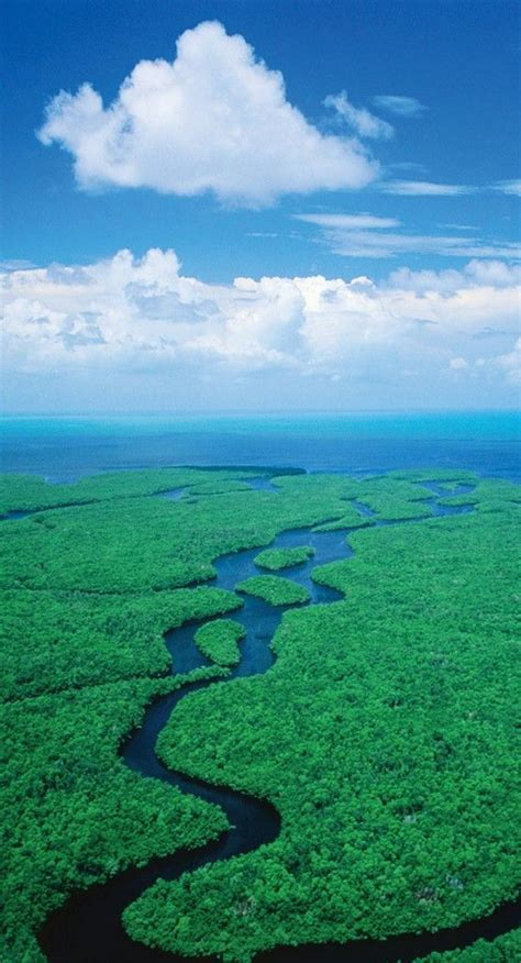 Everglades Boat Tours Near Fort Myers by Best 25 Everglades Airboat Ideas On Florida