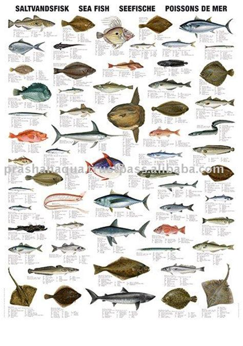 sea fish productssouth africa sea fish supplier