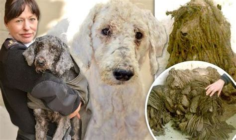 heartbreaking images show abandoned dogs  unable