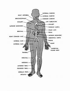 Simple Human Anatomy Diagram   Simple Human Anatomy