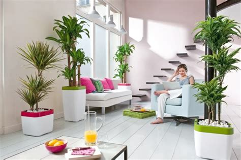 Beautiful Indoor Plants To Decorate Your Home-home Decor