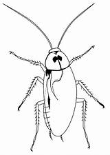 Coloring Pages Cockroach Printable sketch template
