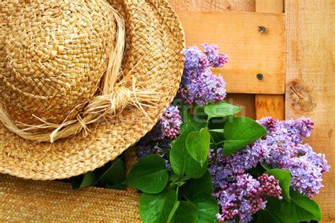 lilac stock  stock images  vectors stockfresh
