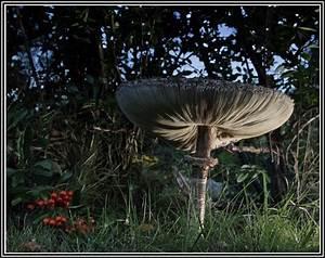Pilze Im Garten Entfernen : pilze im garten entfernen download page beste wohnideen ~ Lizthompson.info Haus und Dekorationen