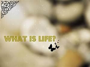 In Life : ecuador joannan silmin ecuador in my eyes what is life ~ Nature-et-papiers.com Idées de Décoration