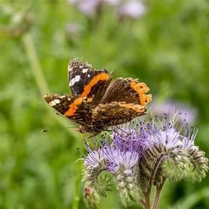 Schmetterlinge überwintern Helfen : neudorff insekten helfen ~ Frokenaadalensverden.com Haus und Dekorationen