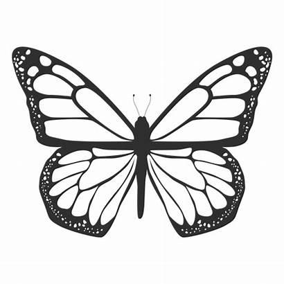 Mariposa Monarca Silueta Silhouette Butterfly Monarch Borboleta
