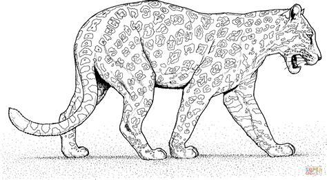 jaguar walks coloring page  printable coloring pages