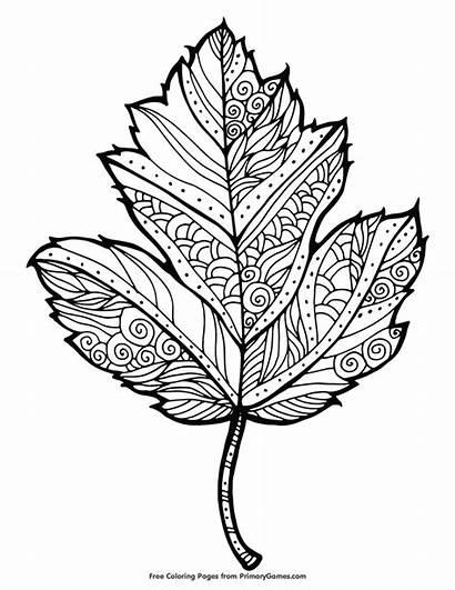 Coloring Fall Maple Leaf Och Gratis Malarboecker