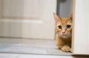 how can you leave cats alone leaving your cat alone 9 things you need to petmd