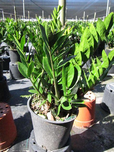 Miami Tropical Plants - Tropical Plant Company in Miami