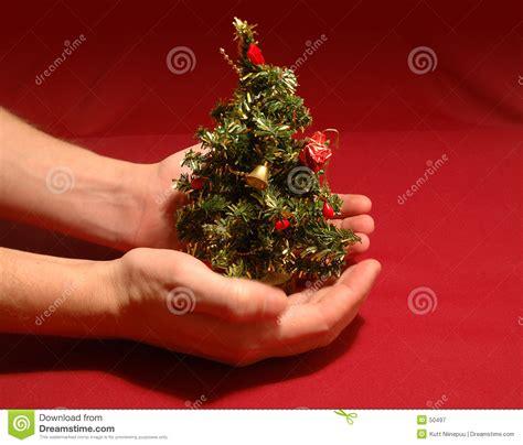 tiny christmas tree tiny christmas tree stock image image of protecting holiday 50497