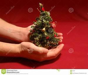 Künstlicher Weihnachtsbaum Klein : kleiner weihnachtsbaum stockbild bild von holding n chstenliebe 50497 ~ Eleganceandgraceweddings.com Haus und Dekorationen