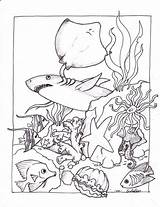 Coloring Ocean Pages Creatures Printable Sea Adult Preschool Underwater Oceans Undersea sketch template