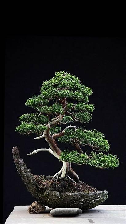 Bonsai Tree Phone Wallpapers Zedge Wallpaperplay Trees