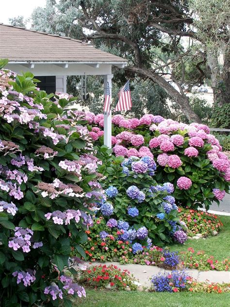 flowering shrubs  shade gardens hgtv