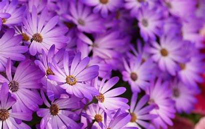 Purple Floral Wallpapers Desktop Flowers Freecreatives