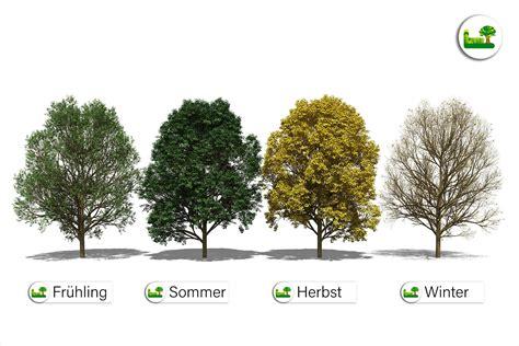 Im Garten Wuchs Der Baum by Bergahorn Im Garten 187 Gr 246 223 E Wuchs Uvm 187 Garten