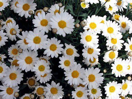 margariten desktop hintergrund    wallpaper