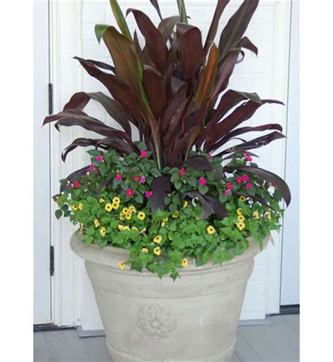 create a beautiful shade container garden gardening