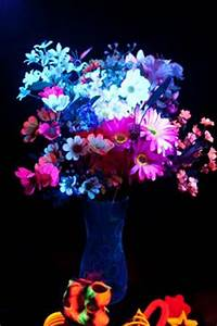 Flower glow in the dark on Pinterest