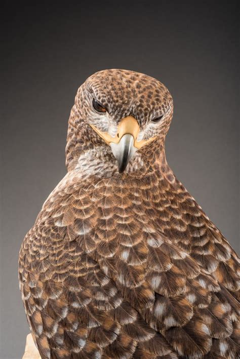 life size red tail hawk sculpture wood carving