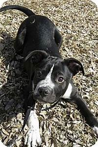Boxer lab mix | Puppy love | Pinterest | Boxer lab mixes ...