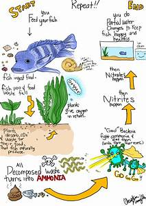 The Aquarium Nitrogen Cycle For Everyone