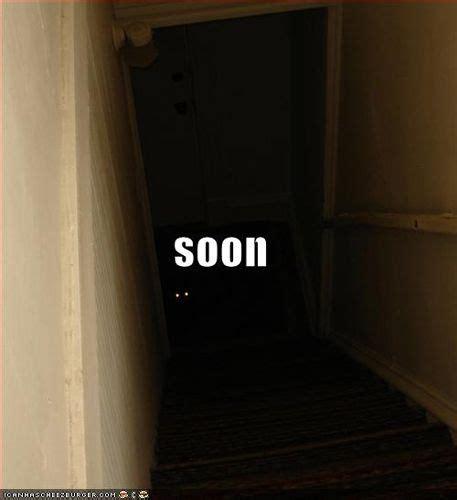 basement cat ideas  pinterest stairs  cats