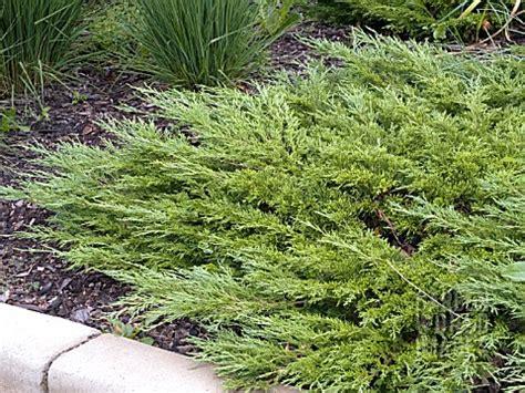 bep juniperus sabina calgary carpet asset details