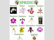 Orchid Repotting Calendar
