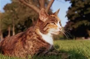 cat spots members fawnclan fanpop