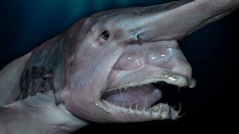 top  creepy deep sea creatures discovered youtube