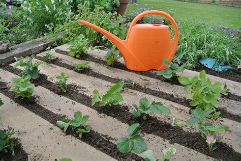 10 Brilliant Strawberry Garden Ideas