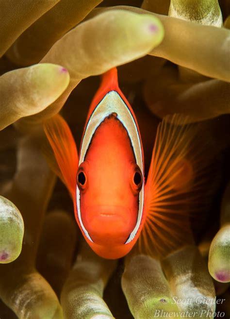 Fish Tank Underwater Photography Digitalizandop