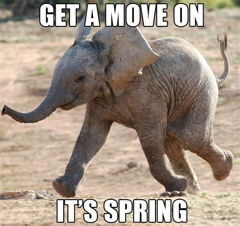 Elephant Memes - 30 most funny elephant meme pictures and photos