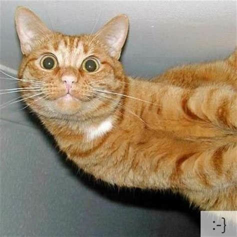 Emoticon Explained With Cat Faces  25 Pics