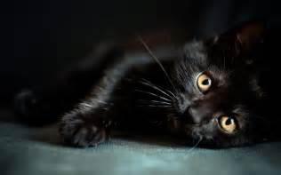 cat wallpaper wallpapers black cat wallpaper cave