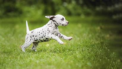 Puppy Puppies Dog Exercise Running Field Appropriate