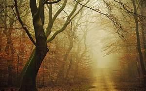 Landscape, Nature, Moss, Forest, Dirt, Road, Fall, Mist