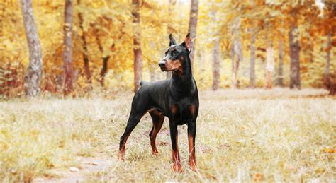 Check out some of our available discounts. Taking a Bite out of Homeowners Insurance Dog Breed Restrictions
